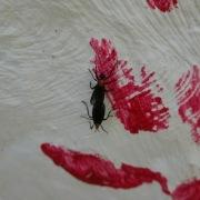 Bug Lust